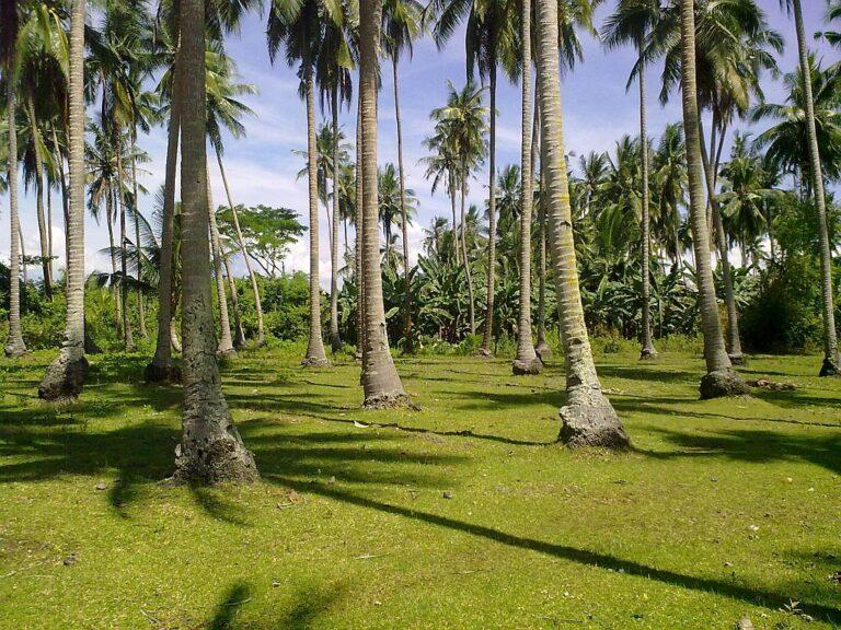 Bohol Lot for Sale Panglao Near Alona Beach