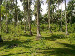 Bohol Lot for Sale Panglao Near Alona Beach2.jpg