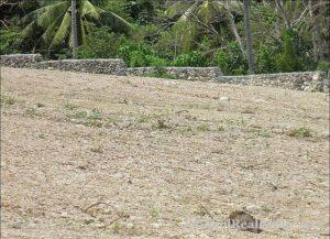 FOR SALE Beach Lot for Resort Hotel Mall or shopping center Siquijor Philippines-014.jpg