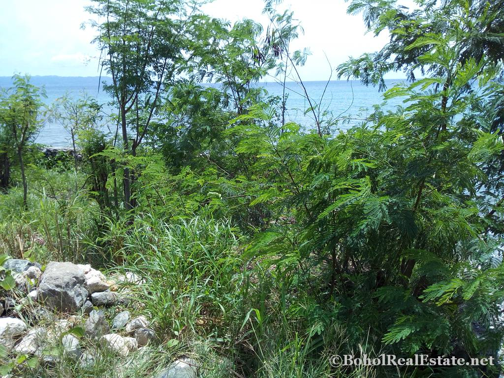 beachfront lot For Sale in Guindulman Bohol Philippines-001.jpg