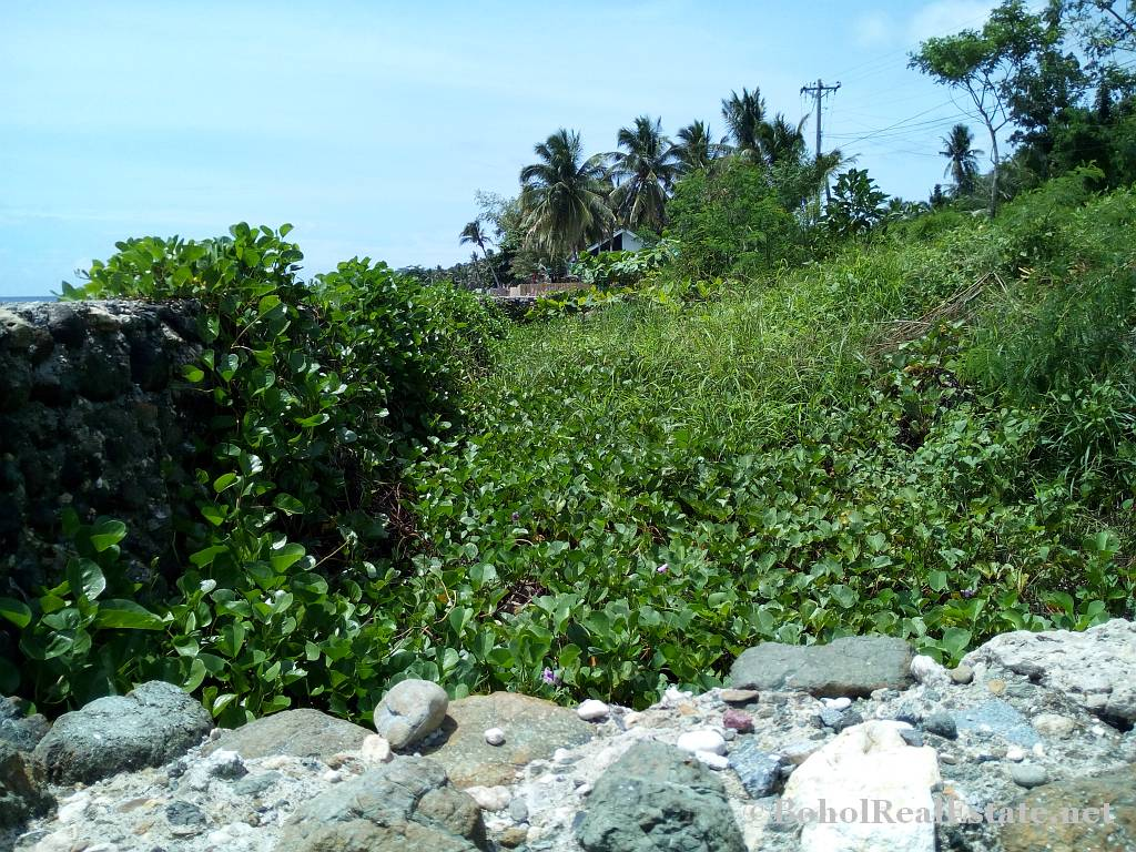 beachfront lot For Sale in Guindulman Bohol Philippines-010.jpg
