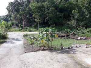 cheap house for sale in catigbian bohol-004.jpg
