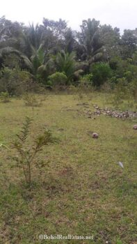 large lot for sale in Panglao Bohol-002.jpg