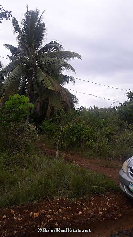 large lot for sale in Panglao Bohol-005.jpg