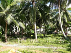 lot for sale Panglao Bohol Philippines - 041.jpg