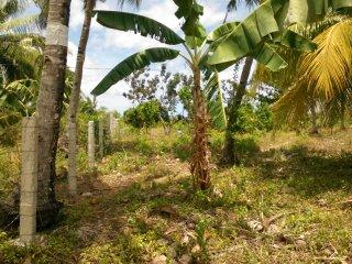 lot for sale in Catarman Dauis Panglao1.jpg