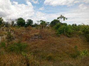 lot for sale in Catarman Dauis Panglao4.jpg